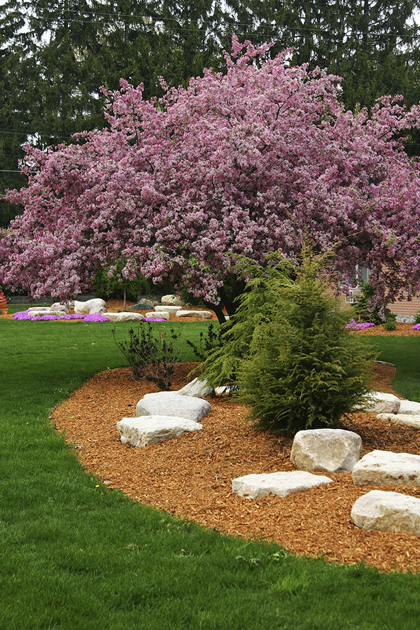 Mulching around trees and bushes will help retain moisture in the soil. (Photos courtesy of Armstrong Garden Centers)