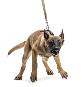 Punishing your dog or getting angry when he/she is reactive on a leash is the wrong approach. (Courtesy of Positivly.com)