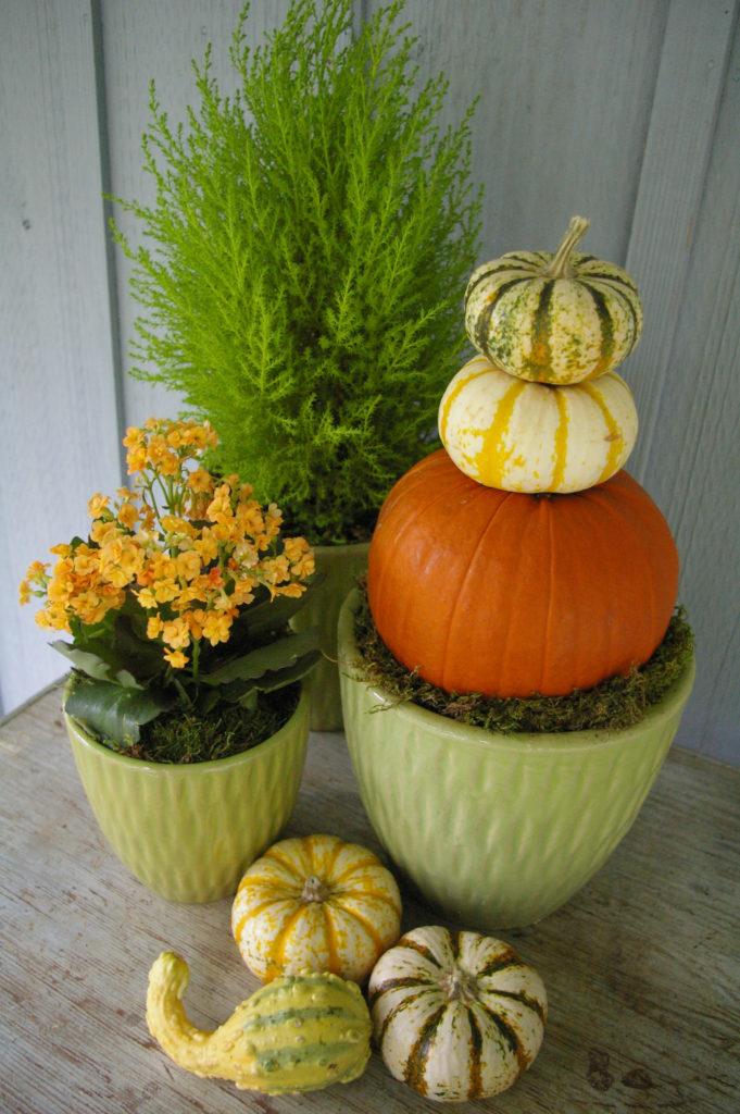 Pumpkin topiaries are great accents for your patio. (Courtesy of Armstrong Garden Centers)