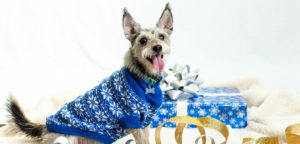 pet-care_holiday-safety-tips_main-image